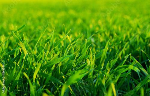 Foto-Schiebegardine ohne Schienensystem - grass (von Alekss)