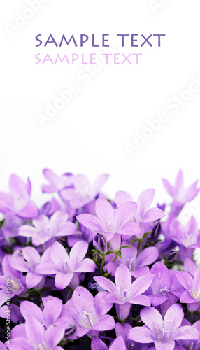 Foto-Lamellen - lovely purple flowers against white background