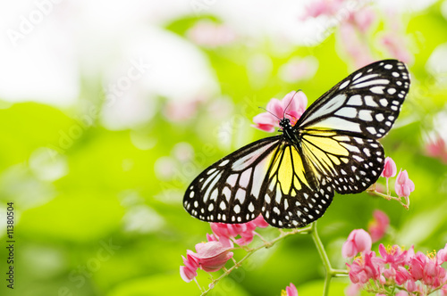 Poster Vlinder butterfly feeding on a flower