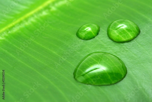 Foto-Banner - drops on  plant