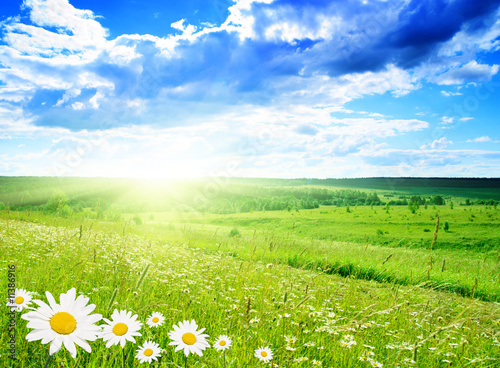 Poster Lente field of daisies