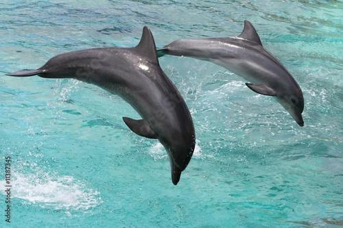 Foto op Plexiglas Dolfijnen Dolphins Jumping
