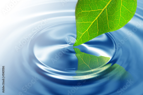 Doppelrollo mit Motiv - Green leaf touching water