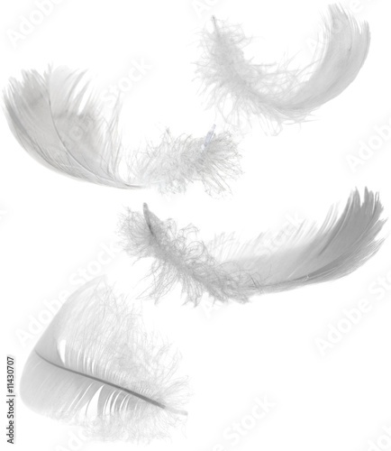 four white feathers