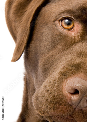 Plakat na zamówienie Dog