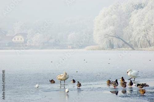 winter landscape with birds #11510348