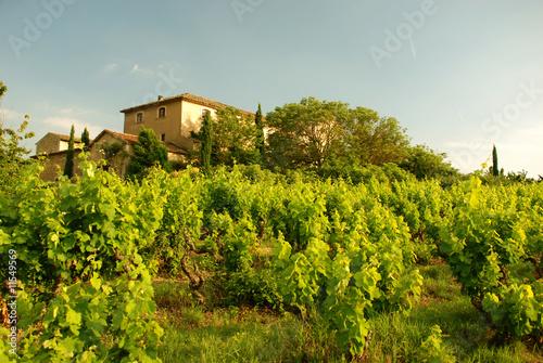 Photo  Weingut in der Provence