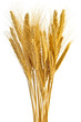 canvas print picture Isolated wheat ears