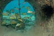 fonds sous-marin14