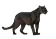 canvas print picture - Black Leopard (6 years)
