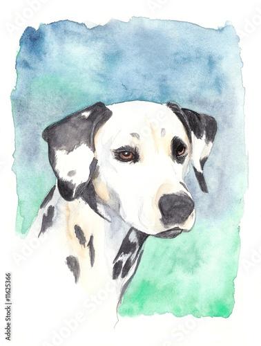 fototapeta na ścianę watercolor - dalmatian