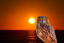 An Owl And Sunrise At West Pal...