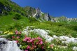canvas print picture - spring in the alps