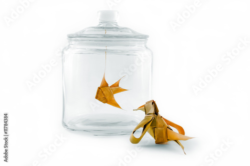 Valokuvatapetti Bird looking at a fish in a glass jar