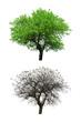 Leinwanddruck Bild trees