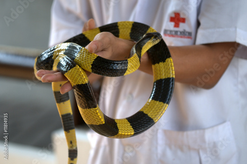 snake bite - Buy this stock photo and explore similar images
