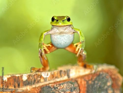 Foto auf Leinwand Frosch Frog