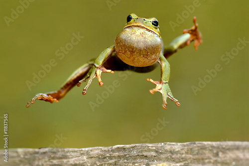 Photo sur Aluminium Grenouille Frog