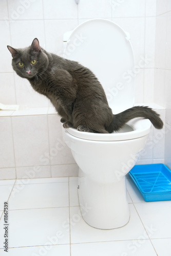 Photo clever cat uses a toilet bow