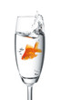 canvas print picture - goldfish jumped into a glass