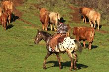 Cowboy E Mandria