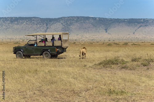 Photo  On safari: tourists watching lions while lions watching tourists