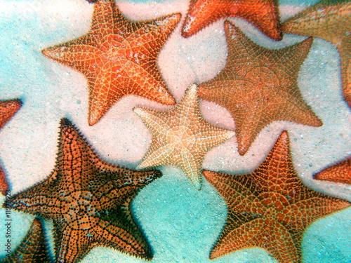Fotografie, Obraz  Sea star 02