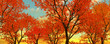 canvas print picture Beautiful autumn trees