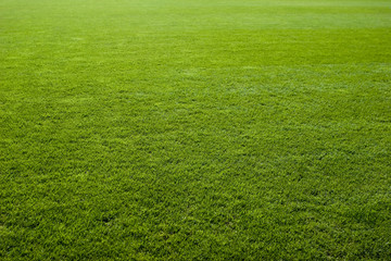 Fototapeta Green grass texture of a soccer field.