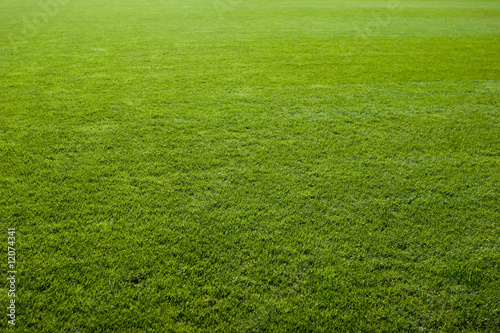 Photo sur Aluminium Herbe Green grass texture of a soccer field.