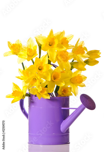 Deurstickers Narcis Daffodil Display