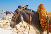 Donkey On The Beach Of Spain