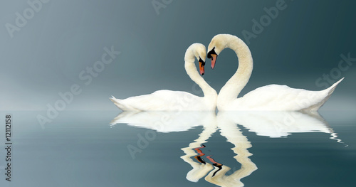 In de dag Zwaan Love Swans