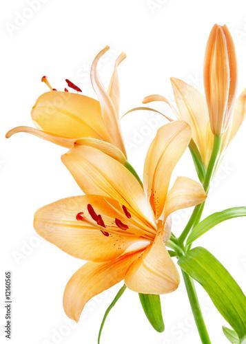 Fotomural Lilies