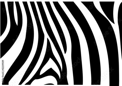 Naklejki zebra   zebrafell