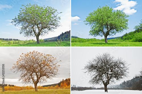 Foto  season
