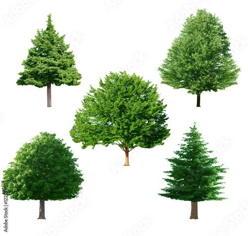 Fotografija  Tree set