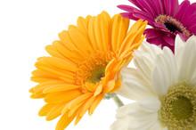 Tricolor Bouquet Of Gerbera
