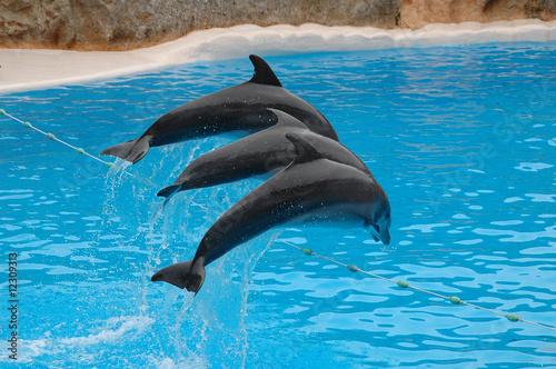 Foto op Plexiglas Dolfijnen Delphine