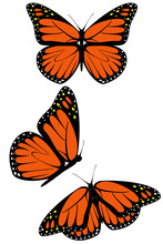 A Set Of Three Monarch Butterf...