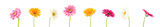 colorful gerbera background