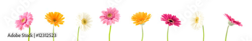 Fotografie, Obraz colorful gerbera background