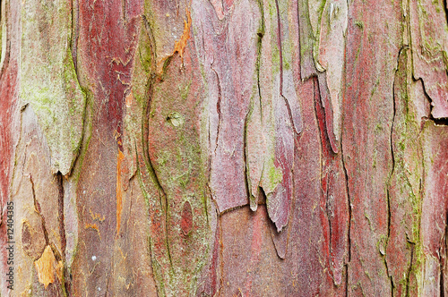 Fotografie, Obraz Natural yew tree bark abstract background