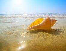 Seashell Sand And Ocean