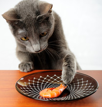 Cat Wants To Steal Shrimp From...
