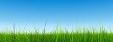 Green Grass Over A Clear Blue Sky Banner As Background