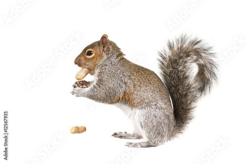 Pinturas sobre lienzo  The  squirrel in the winter
