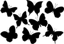 Set Of Various Flying Butterfl...