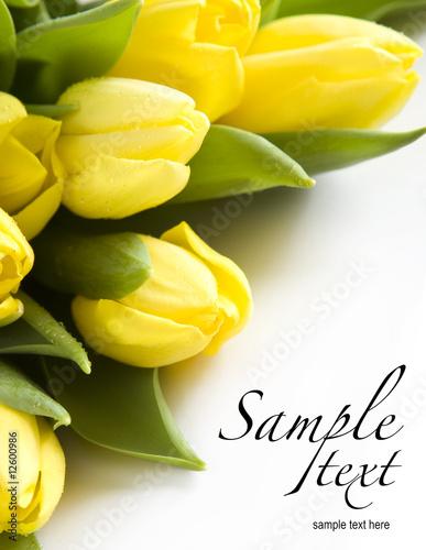 Fotorollo basic - Spring Flowers (von Worytko Pawel)
