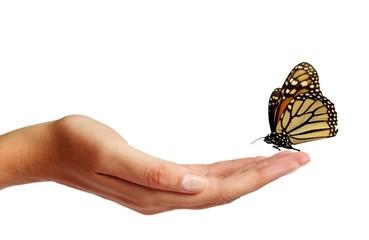 Fototapeta Butterfly on a hand